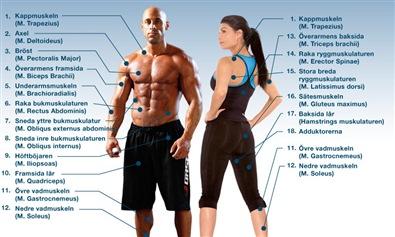 Bygga muskler program